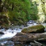 Matukituki-River-woods-new-zealand