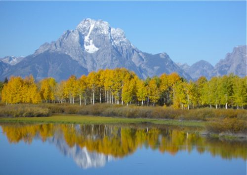 Golden fall leaves are reflected in the blue water of Oxbow Bend with the Grand Teton mountains looming in the distance.