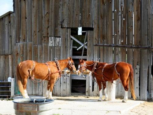 horses-barn-paso-robles-california