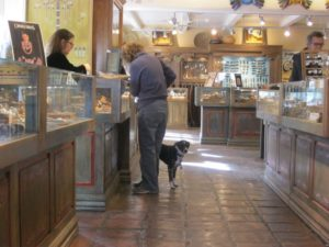 dog-shopping-gallery-santa-fe-new-mexico