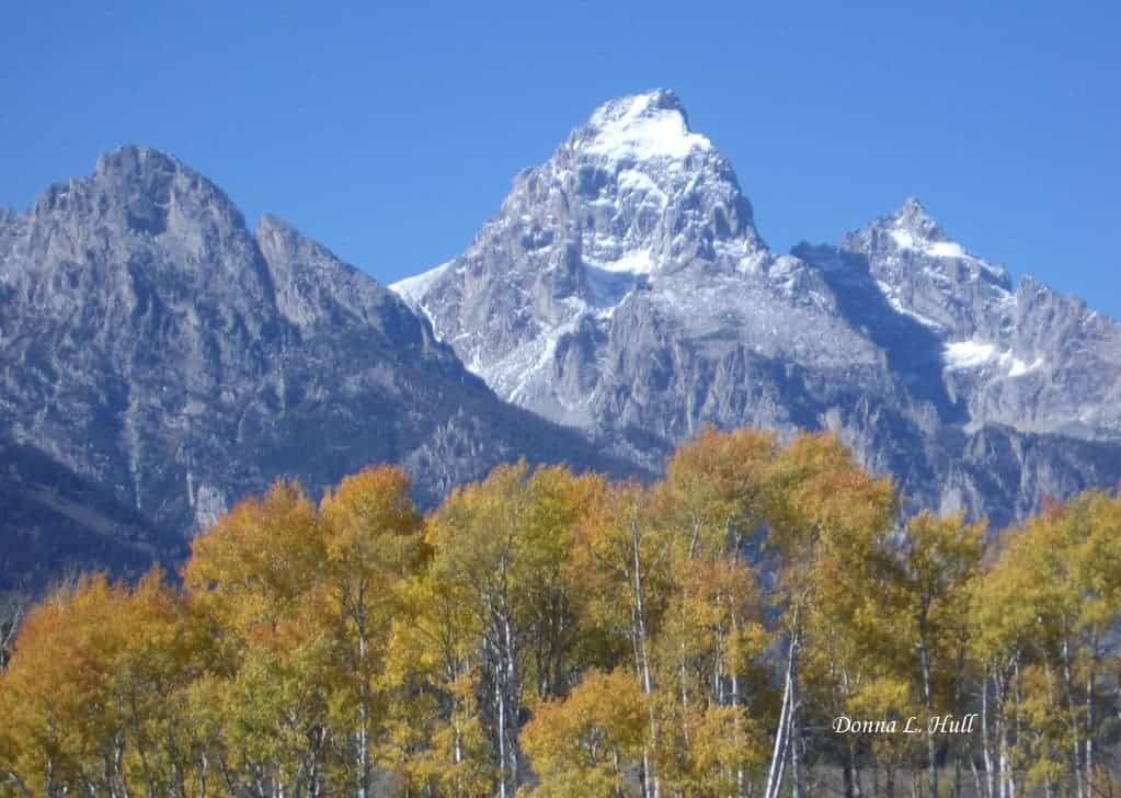 changing-leaves-grand-tetons
