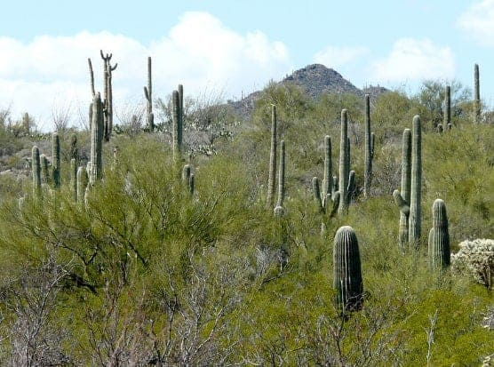 Saturday's scene: standing tall in Tucson