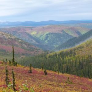 Fall color on Top of the World Highway in the Yukon