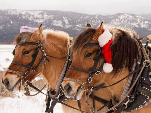 Horses pull the sleigh at The Resort at Paws Up