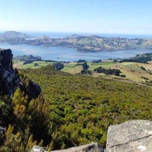 Mt Cargill walk in Dunedin, NZ