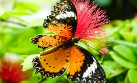 Discover butterflies and more on a day in Key West.