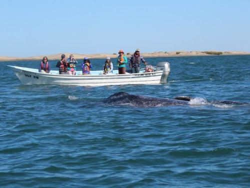 Whale watching in Magdelana Bay