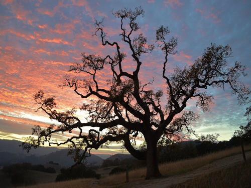 Sunset on Mt Burdell