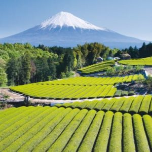 Explore Japan with World Expeditions