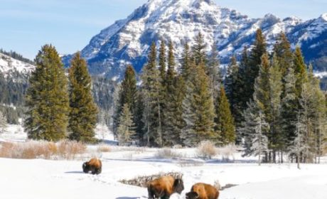 Visit Lamar Valley in the winter