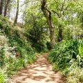 Levada walk on Funchal, Madeira
