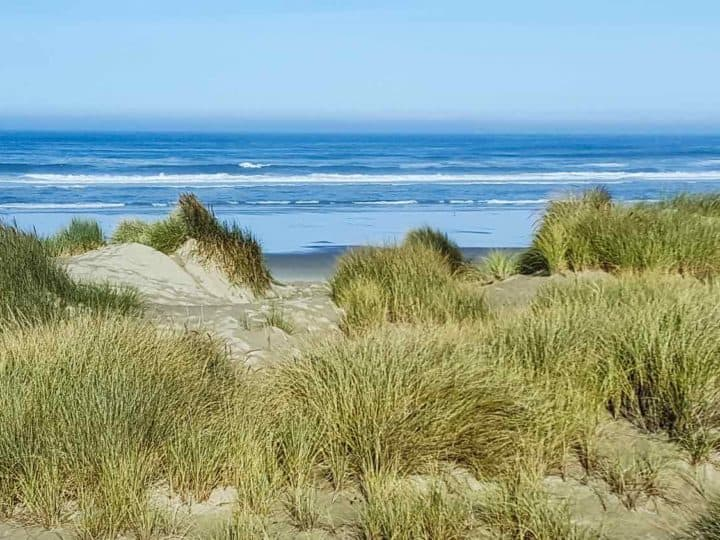 sand dunes in front of the ocean