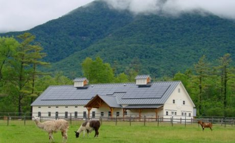 goats grazing in front of a barn surrounded by mountains