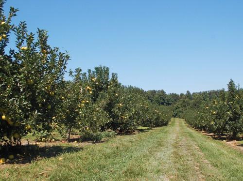 Autumn Escape to Hendersonville, North Carolina