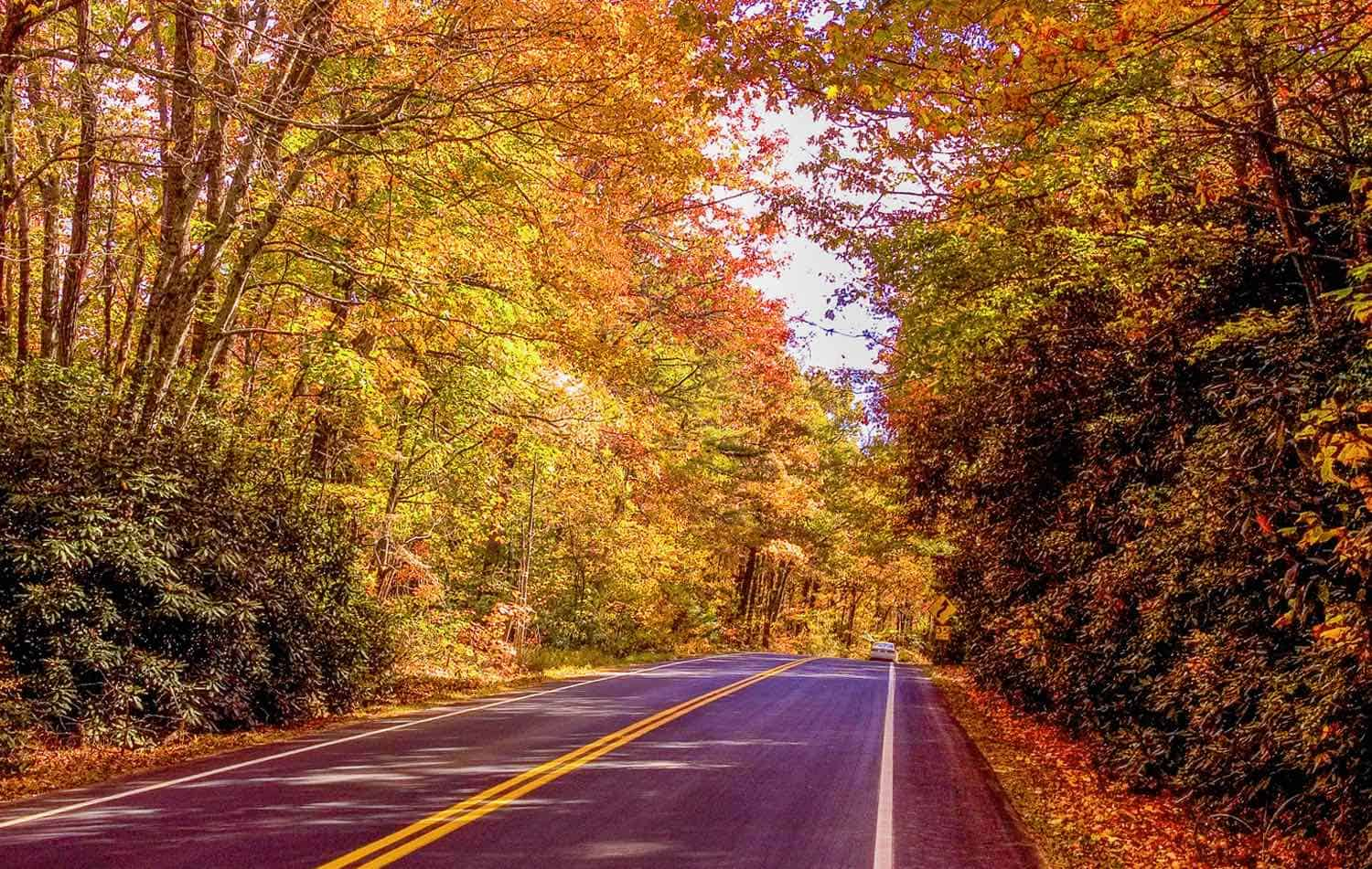 Fall in the South: Admire Autumn Without the Crowds