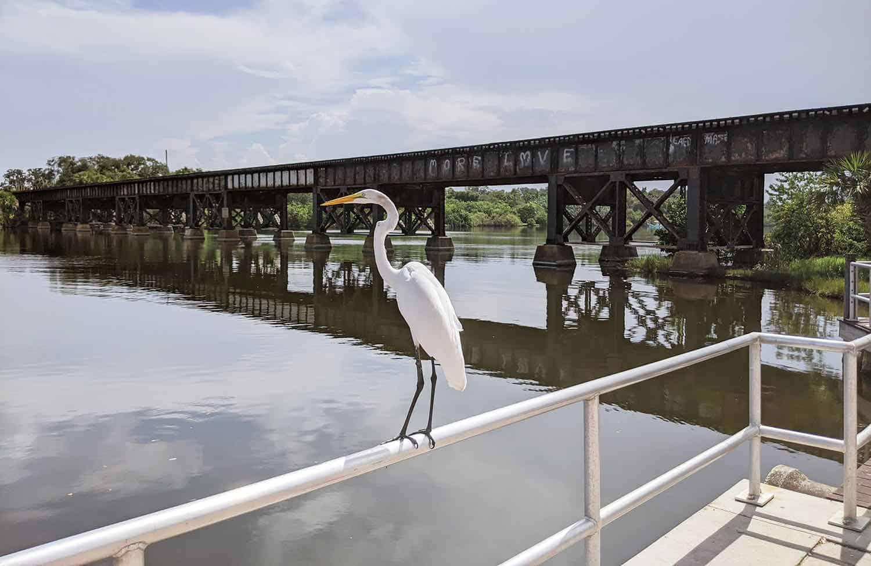 White crane on a rail by a river