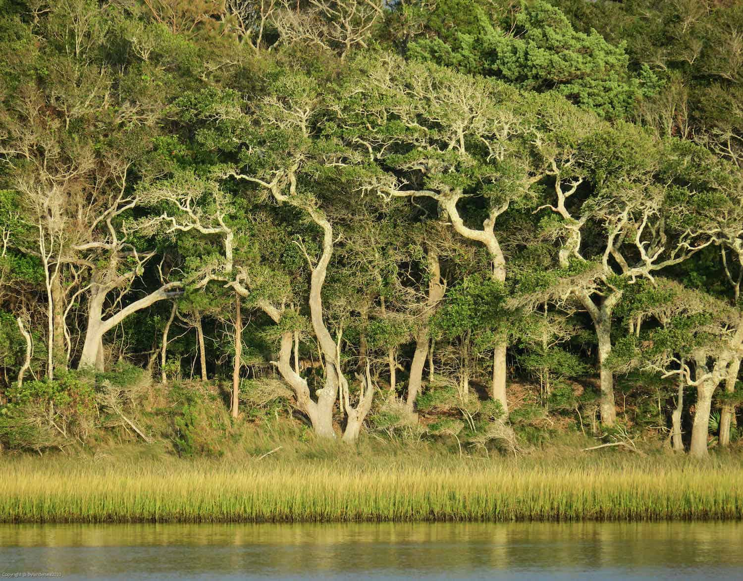 whimsically shaped trees in a maritime forest